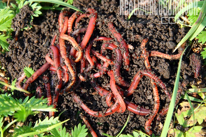 Beginners Guide To Worm Farming For Better Soil